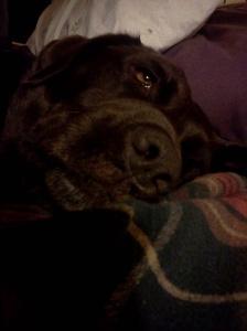 sleepybrowndog